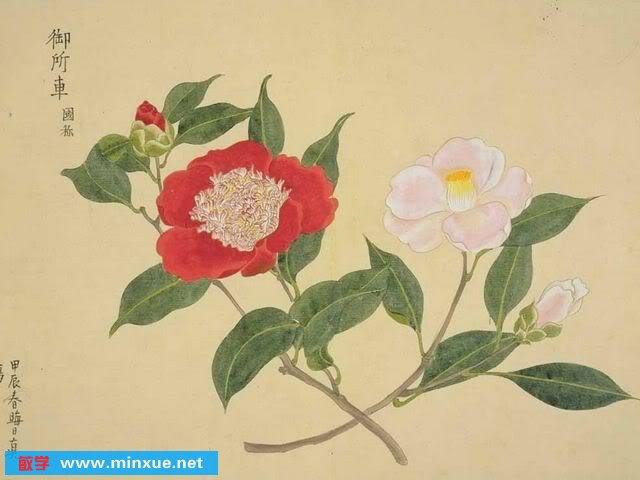 《日本贵重图谱像-教案植物》(JapaneseBota初中excel书画图片