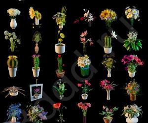 《3ddd_高精度花卉模型集锦》(3ddd_Flowers_3dmodels)2010[压缩包]