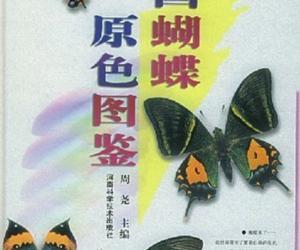 《中国蝴蝶原色图鉴》扫描版[PDF]