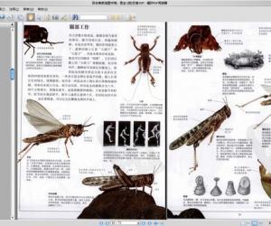 《目击者家庭图书馆:昆虫·彩图版》扫描版[PDF]