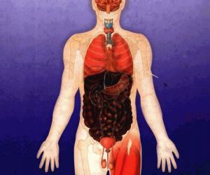 《彩图生理学百科》扫描版[PDF]