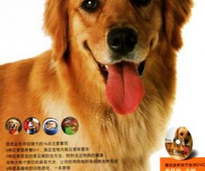 《金毛寻回猎犬》扫描版[PDF]