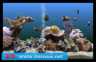 能喂鱼食的热带鱼屏保 求 真的图片