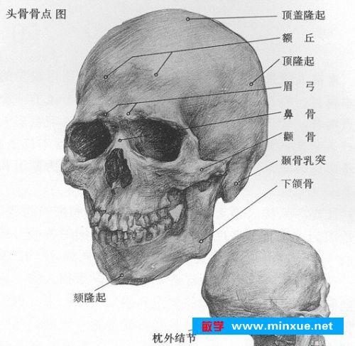 脸结构详细图解