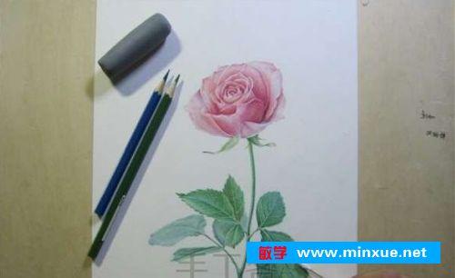 《【彩铅】彩铅手绘玫瑰花》