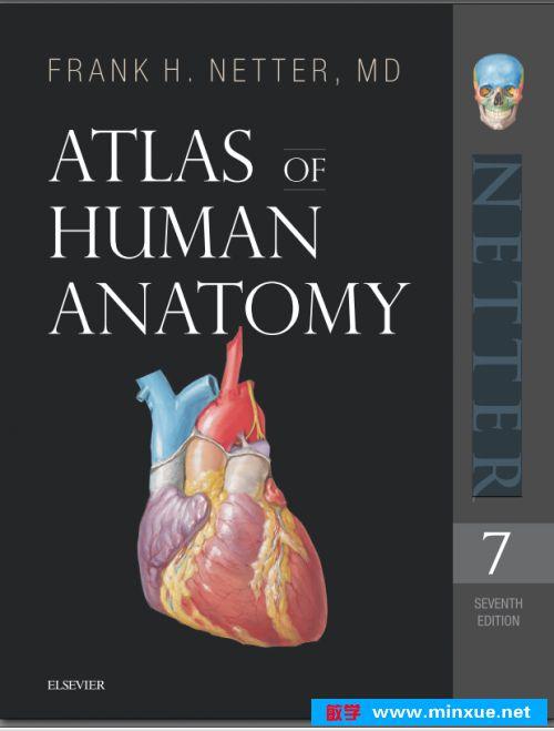 人体胸部结构图_《奈特 netter人体解剖图谱第七版【上】 》 _ 外科 _ 医学 _ 科技 ...